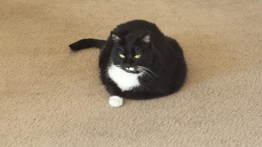 4 years ago, she was given 2 weeks to live. Today is her 21st birthday. Still sassy as ever.