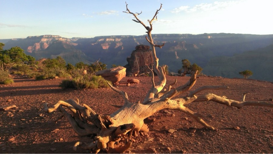 Fallen tree in the Grand Canyon. Grand Canyon, Arizona [1920 x 1080]