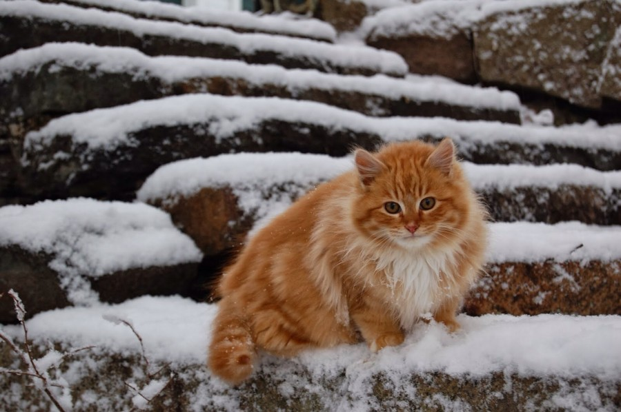 This is Peanut Butter. He likes the snow.