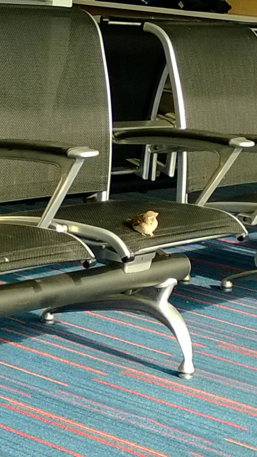 Waiting for his flight out of JFK
