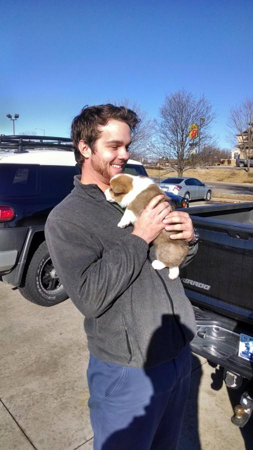 Roommates first Corgi puppy!