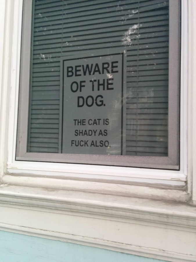 Watch out for the cat
