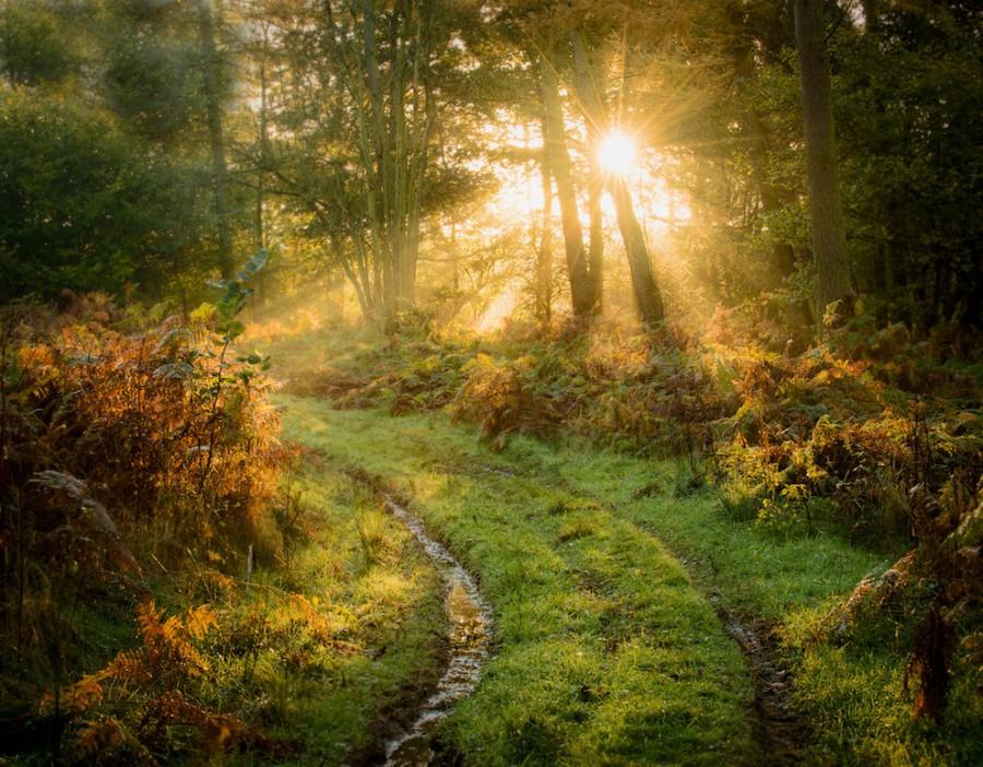 Newlands Forrest, Cannock [990×773]
