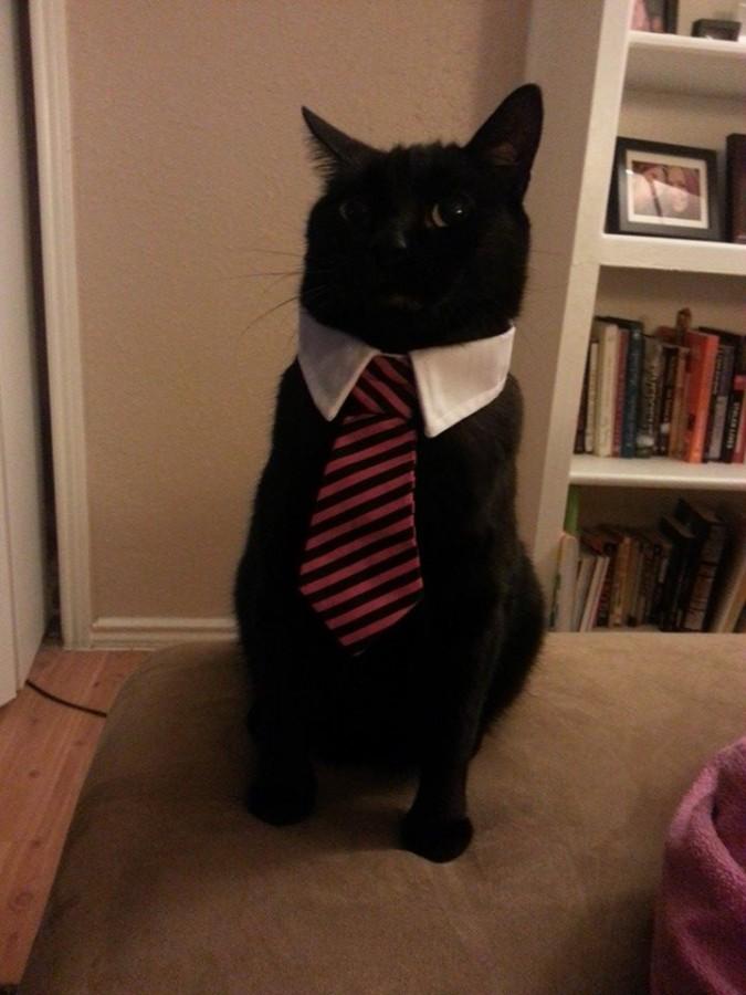 Got my girlfriend's cat a tie, best 5 bucks I ever spent.