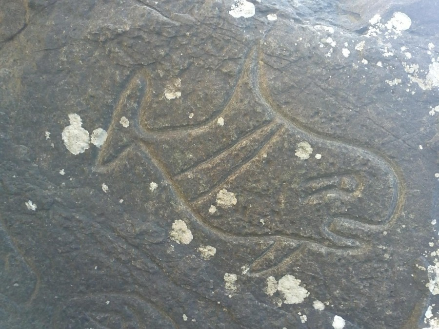 Orca petroglyph on Washington state coast [OC] [1600 x 1200]