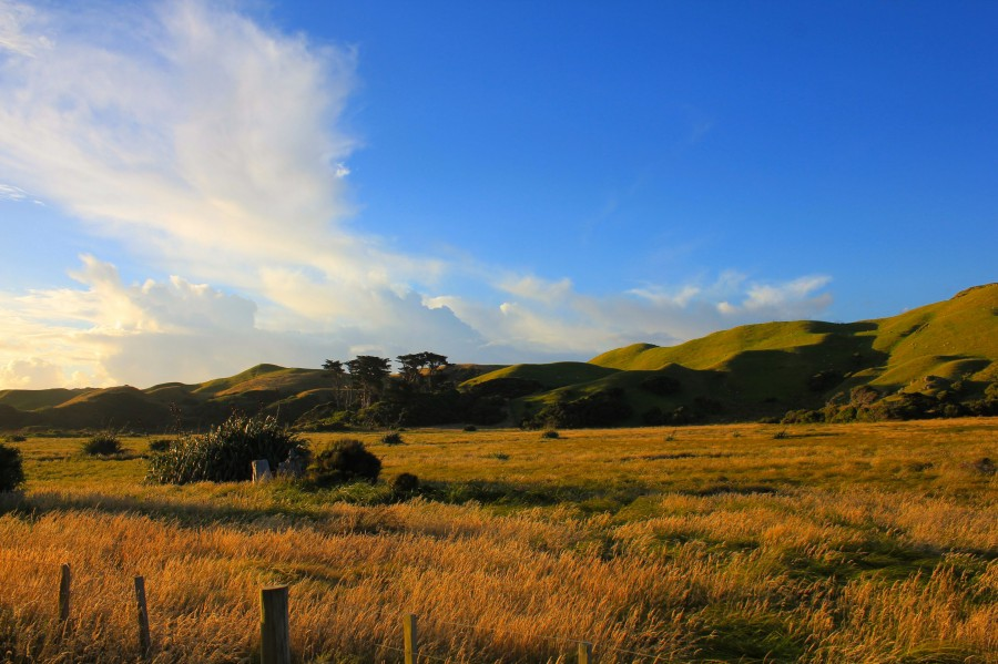 Puponga, Wharaiki Road, New Zealand [3110×2073]