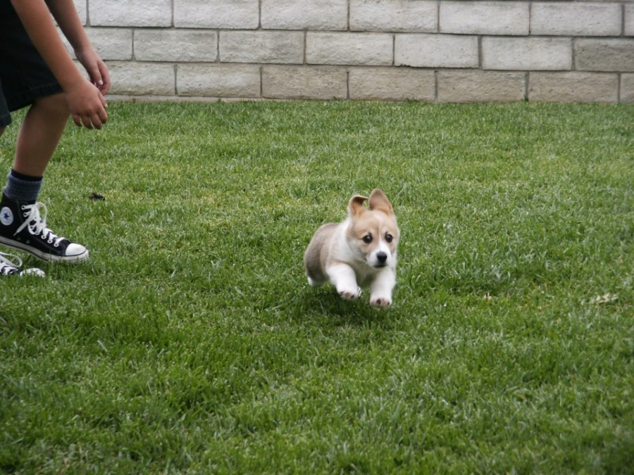 """Not gonna catch me!"" Pic of baby Oliver that his previous owners sent my brother."