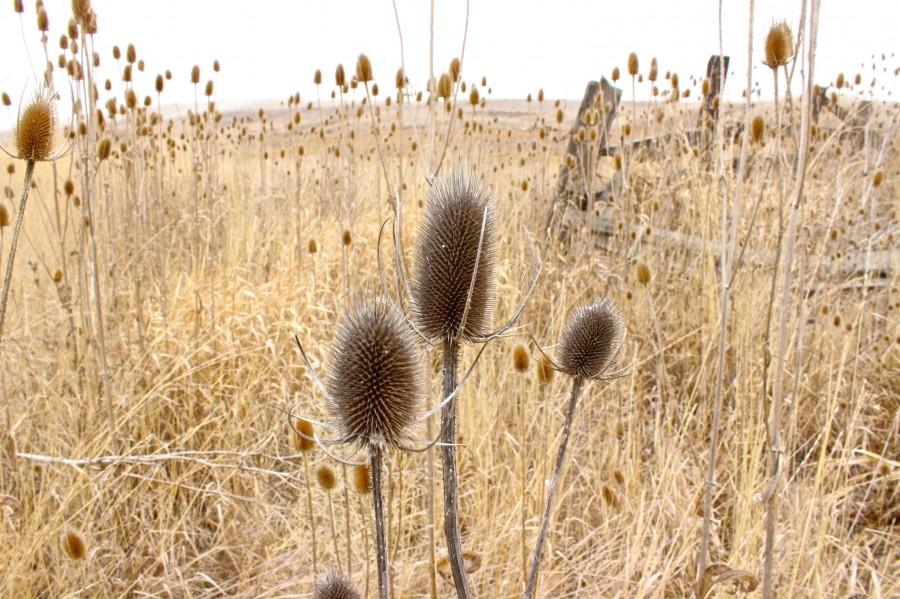 Field of Prickles in Fishtrap,WA [3110×2073] [OC]