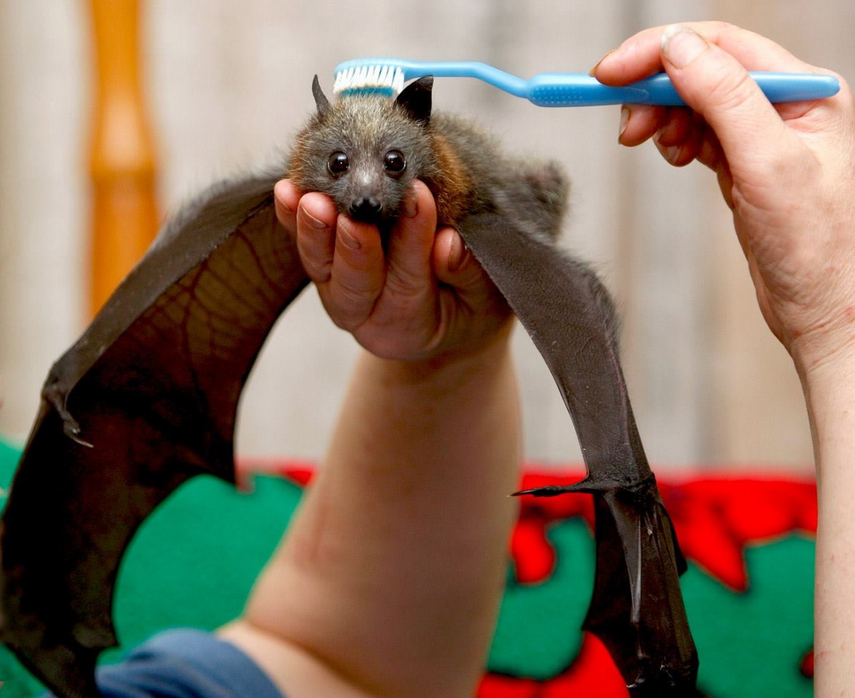 Избавляемся от страхов: летучие мышки