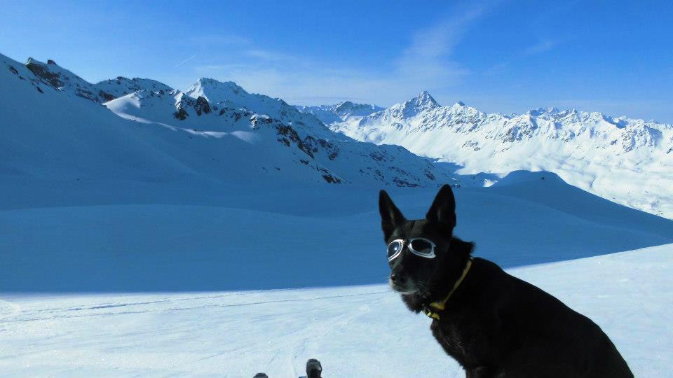 The avalanche rescue dog