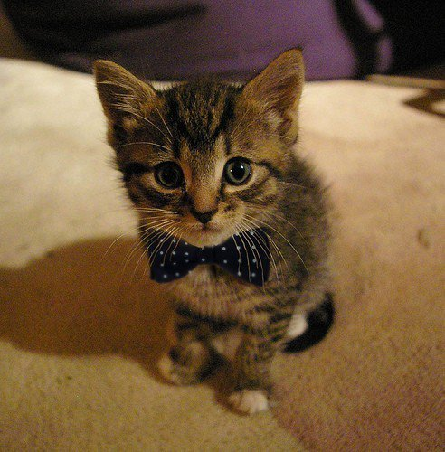Cute Bow-Tie Kitty