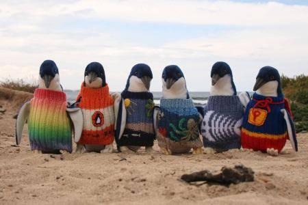 Rehabilitating penguins wearing sweaters