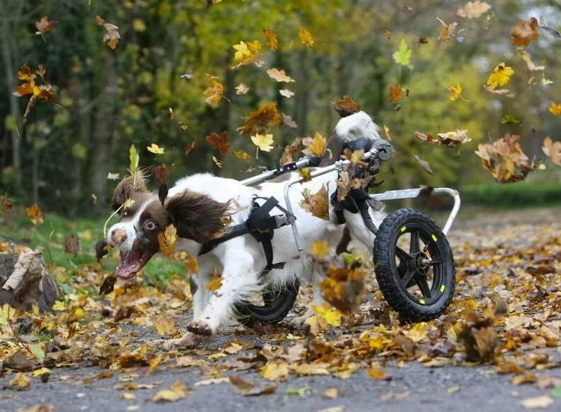 This guy in his wheel chair, chasin' some leaves!