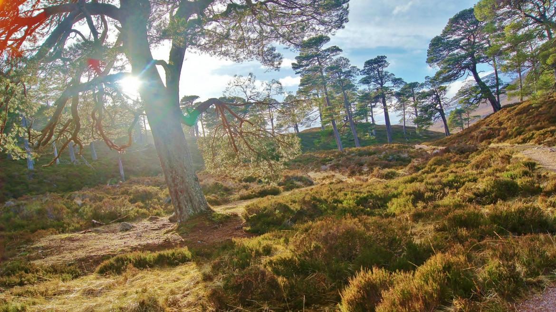 Forest of Mar, Cairngorm National Park, Scotland. (OC) [2579 x 1449]