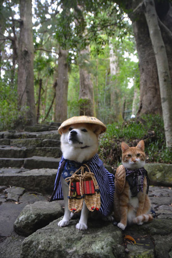 Shiba Inu and cat. Such friend.