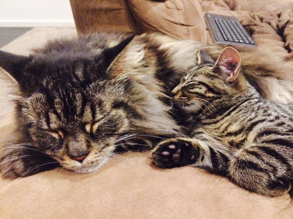 Bestfriend and I moved in together, but we weren't sure if our cats would get along.. Two weeks later