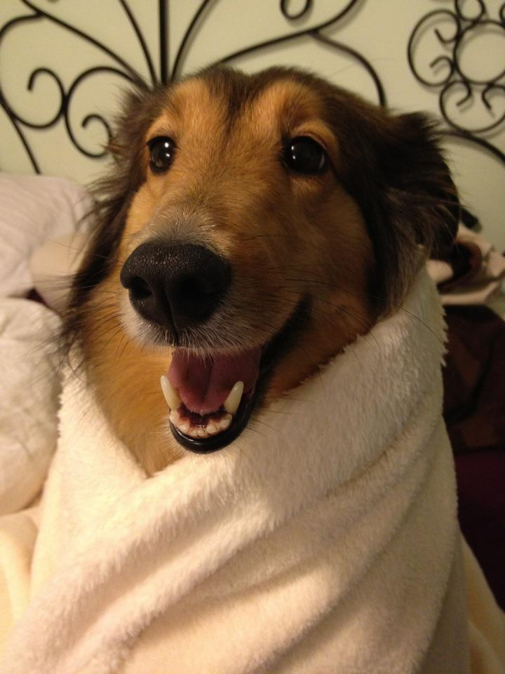 Aww, fresh out of the bath!