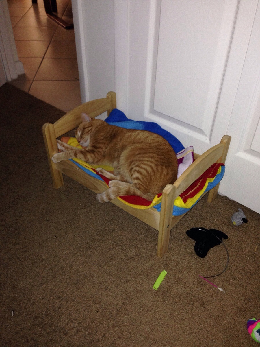My cat has her own bed…