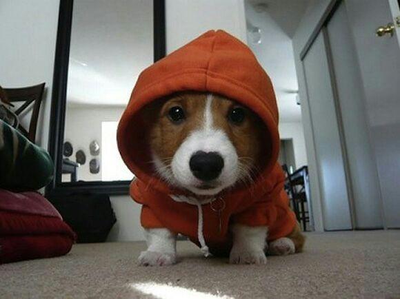 He likes his jacket