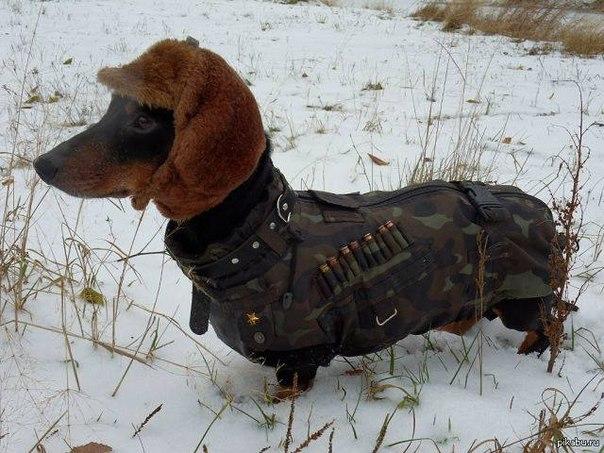 Wiener militia