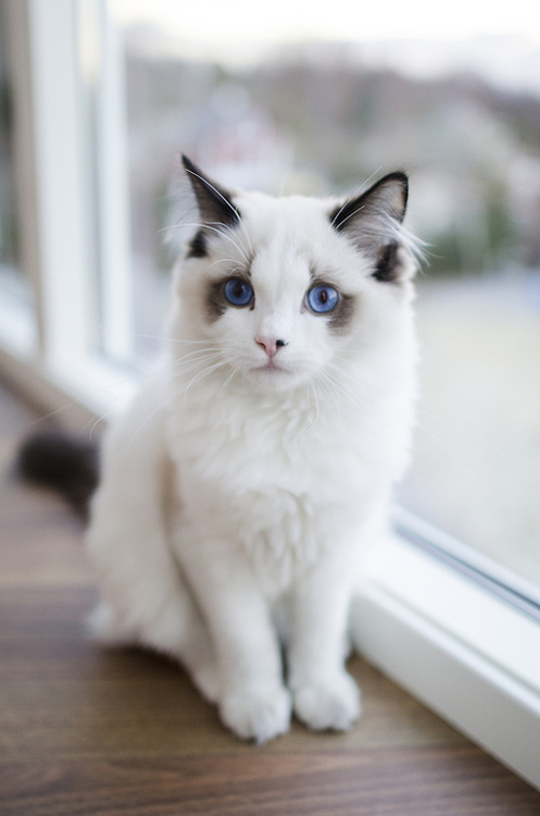 This is the most beautiful cat I've ever seen!