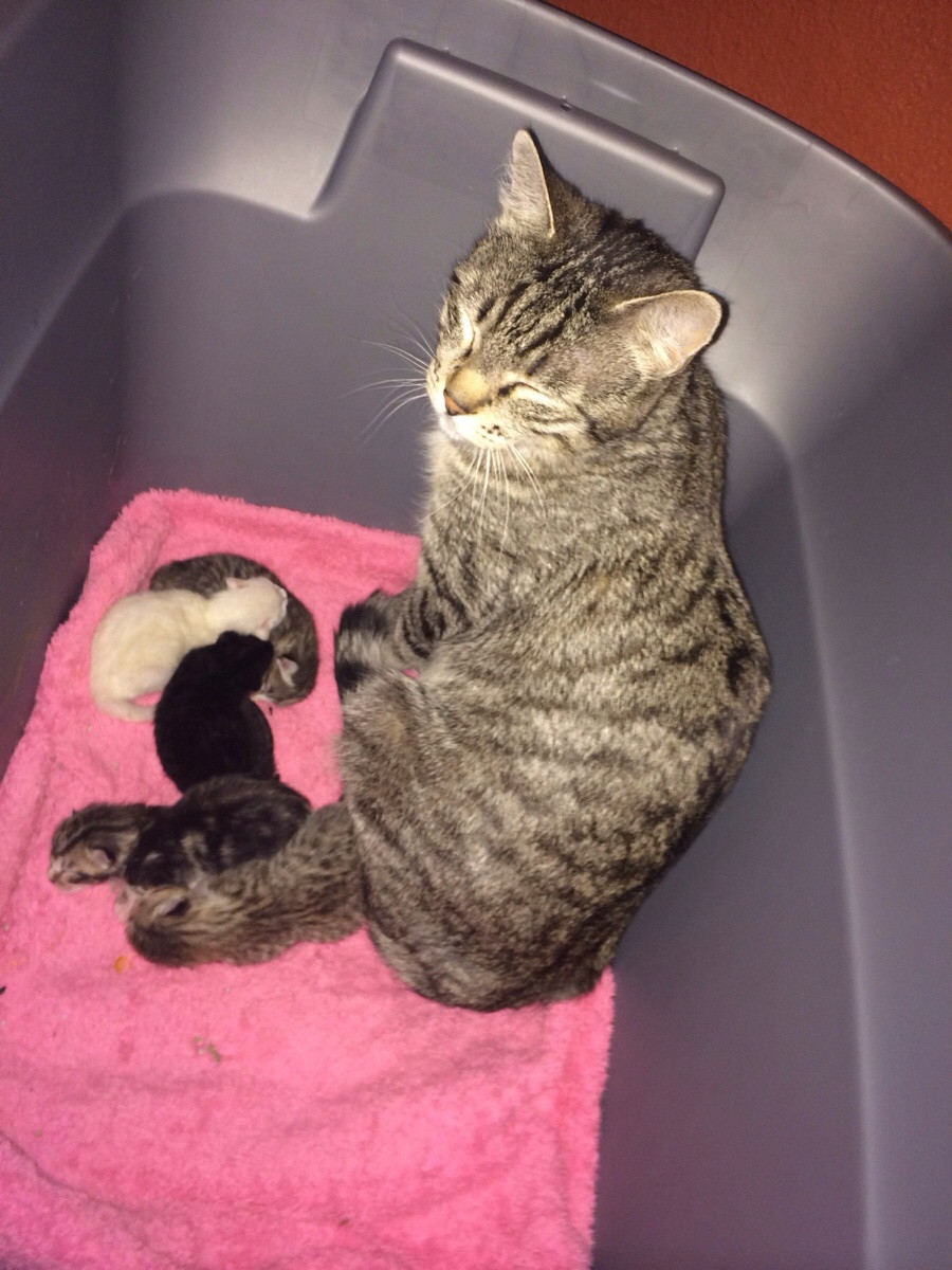 Fresh Kittens and one tired mom