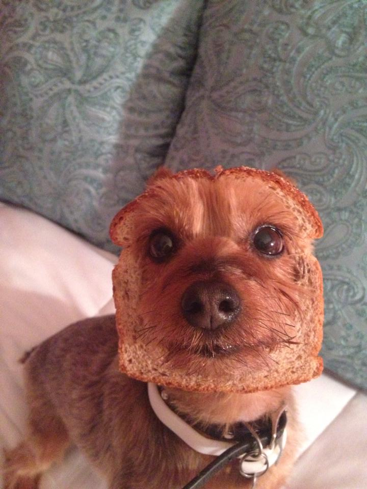 Half-dog Half-bread
