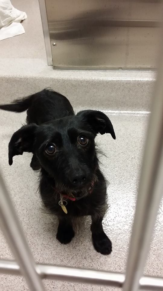 Look at those puppy dog eyes… At the local shelter.
