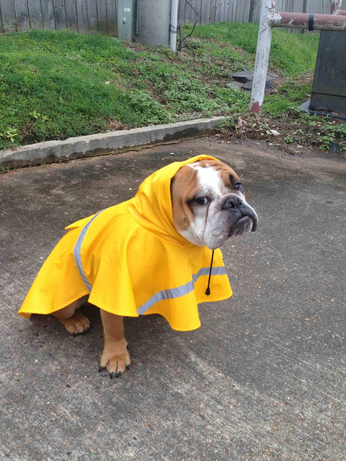 the only way he'll go outside in the rain.