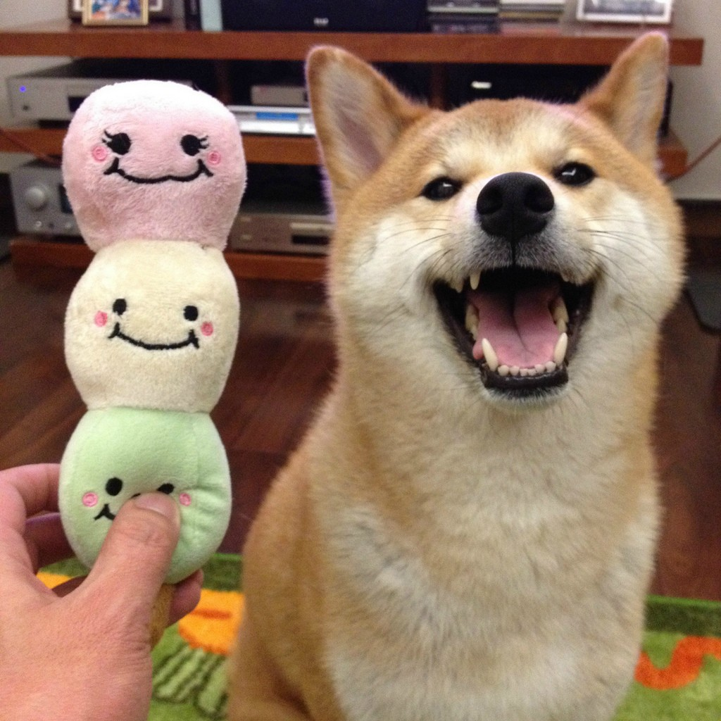 The Happiest Shiba