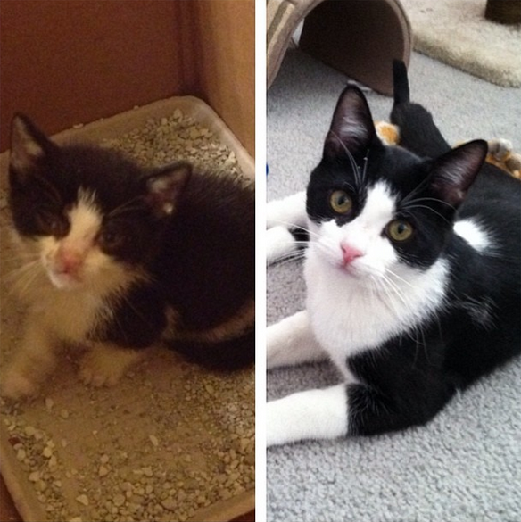 Friend of mine found this little guy in the street about a year ago. Look at him now!