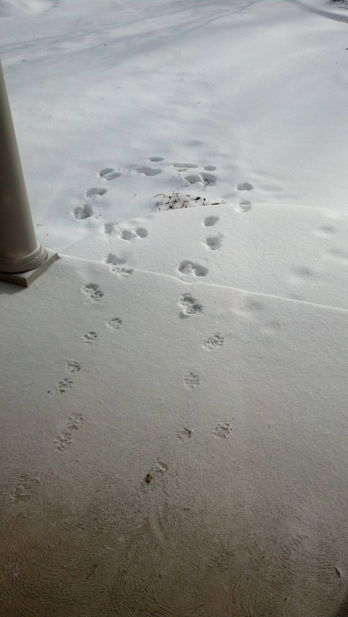 My dog loves the snow too……….