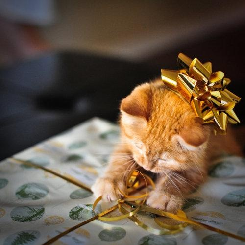 I must help you open this present