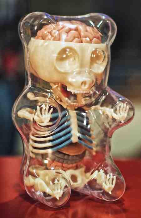 The inside of a gummy bear