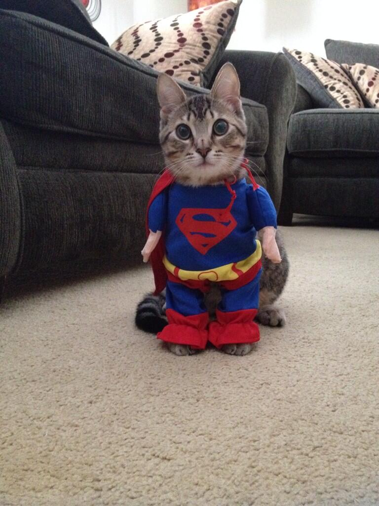 Supercat!!! Best purchase!