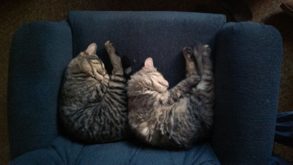 Synchronized Nappies
