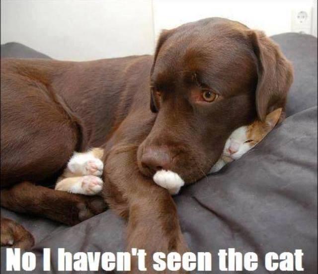 What cat….?