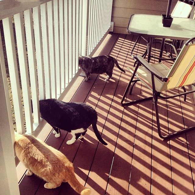 My friend's cats finally have a nice day to go outside…