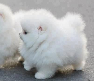 My gosh, it's like a cloud with legs