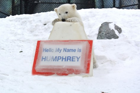Toronto Zoo named their polar bear cub..